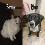 Bernice-and-Ringo